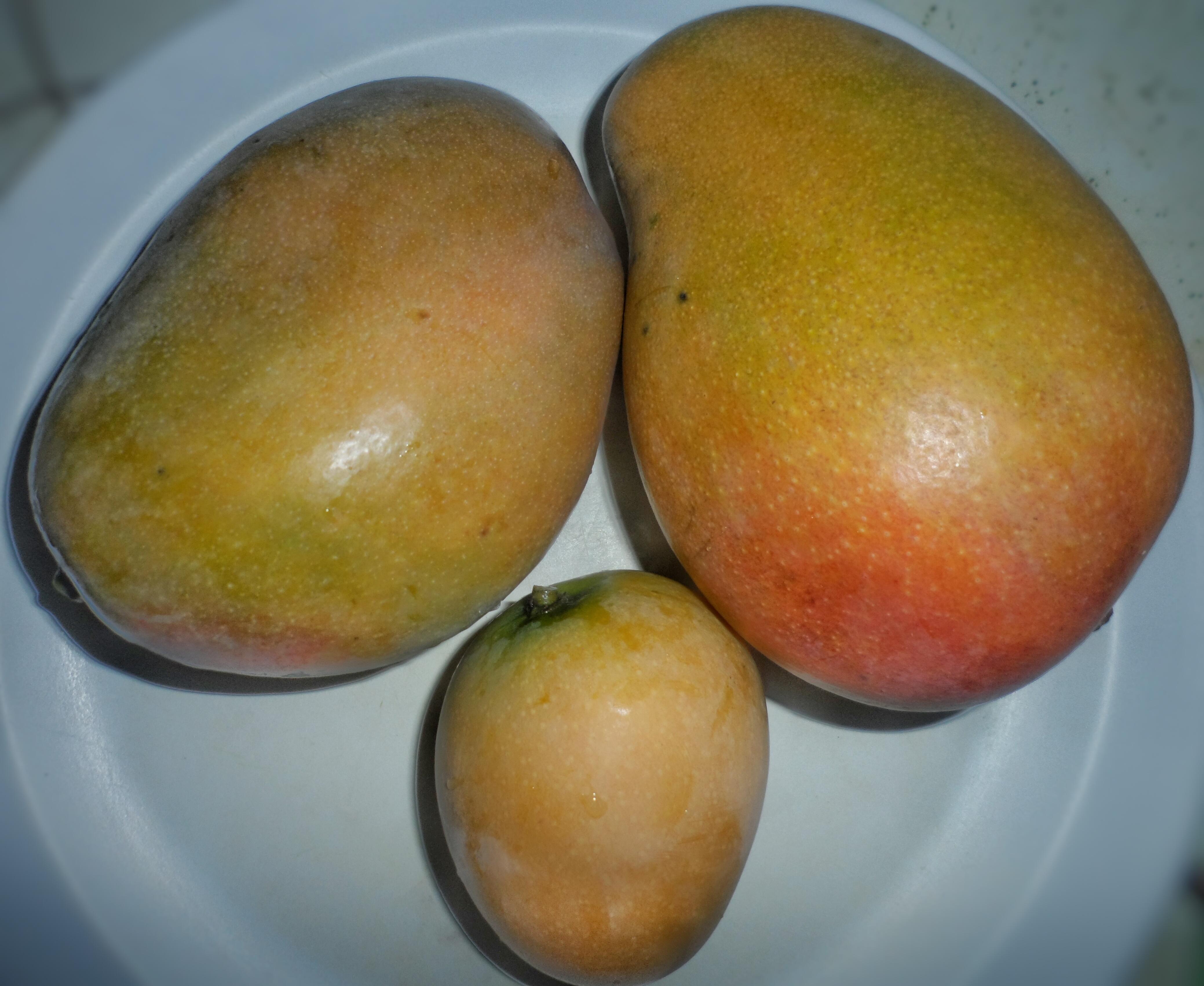 Which hole vagina mango
