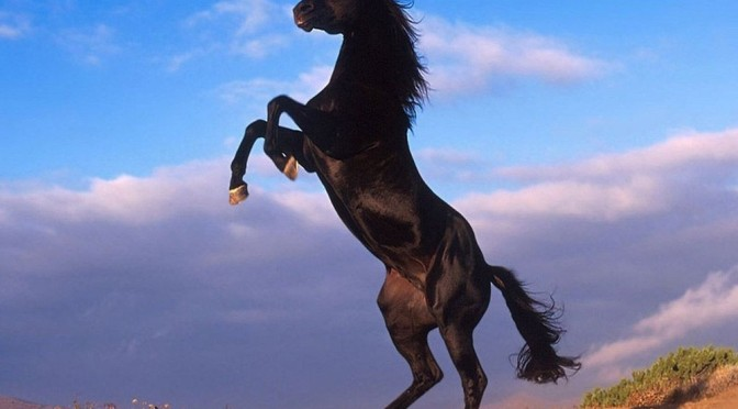 How To Tame A Stallion